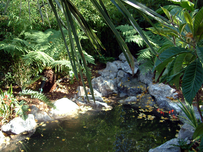 Tropical garden and pond design London | Urban Tropics