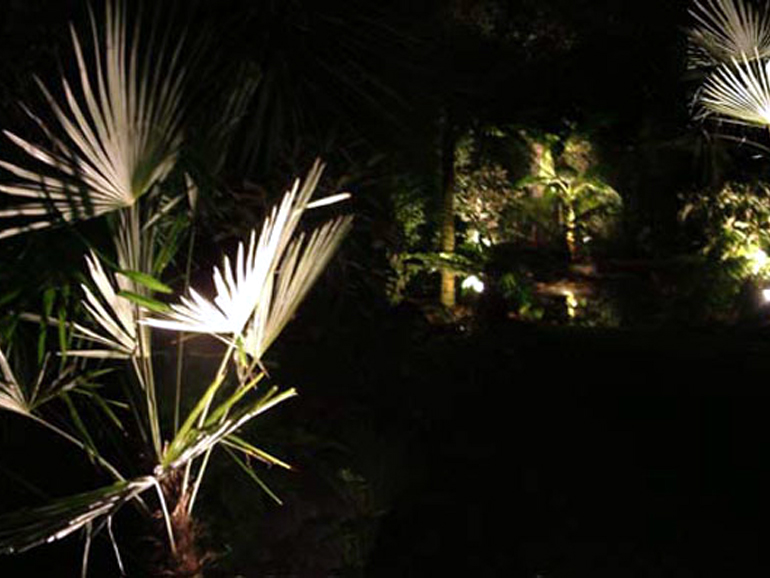 Night lighting in a tropical garden London | Urban Tropics
