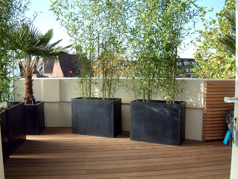 Contemporary planting of a London roof garden | Urban Tropics