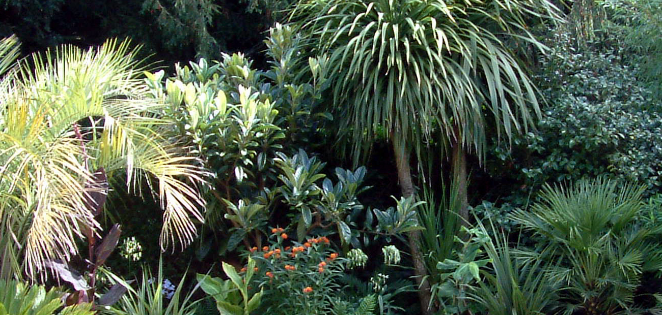 Tropical Planting | Urban Tropics London