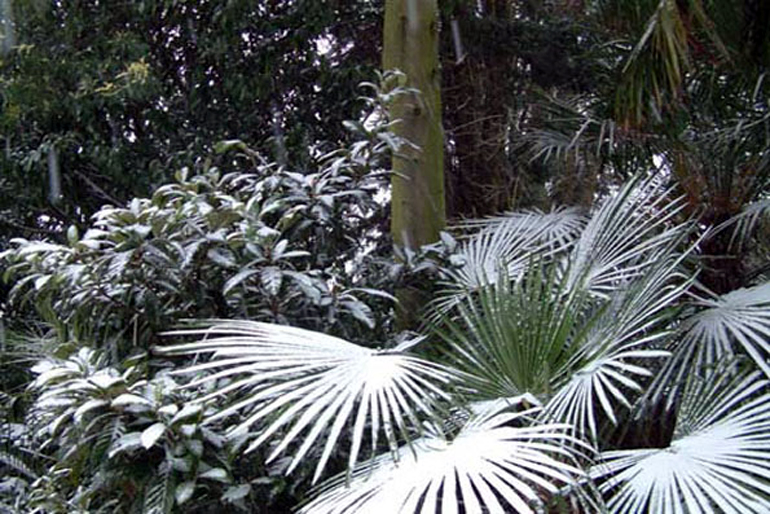 Tropical garden London in extreme cold