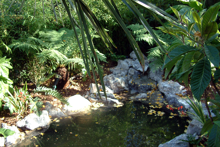 Tropical garden and pond in a London garden designed and landscaped by Urban Tropics