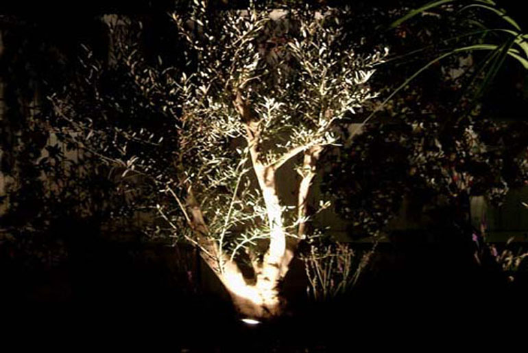 Mediterranean garden London | lighting an olive tree