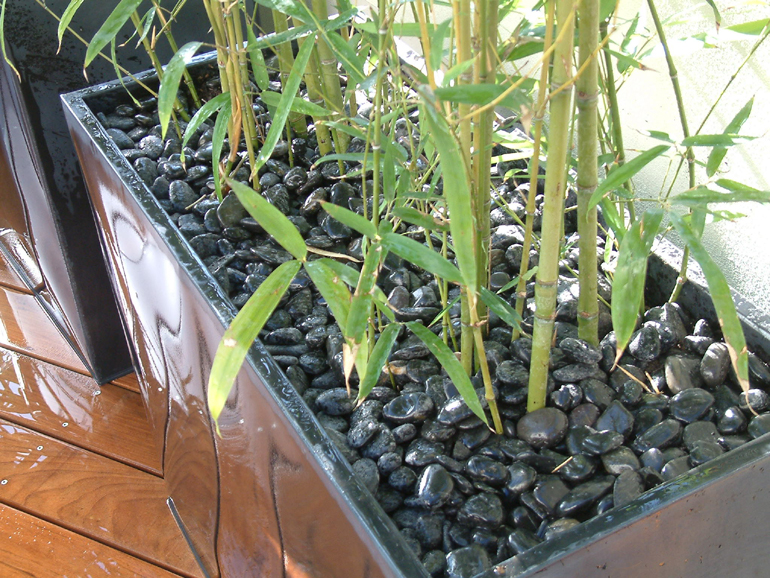 Contemporary planting of bamboo on a London roof garden
