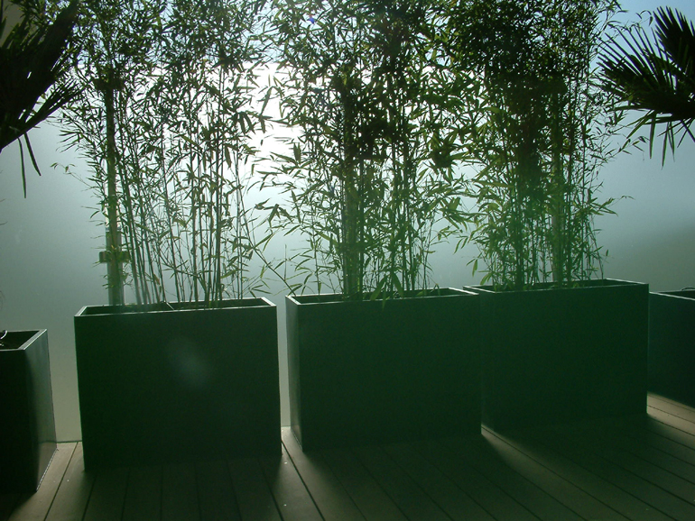 Bamboo for screening on a contemporary London roof terrace