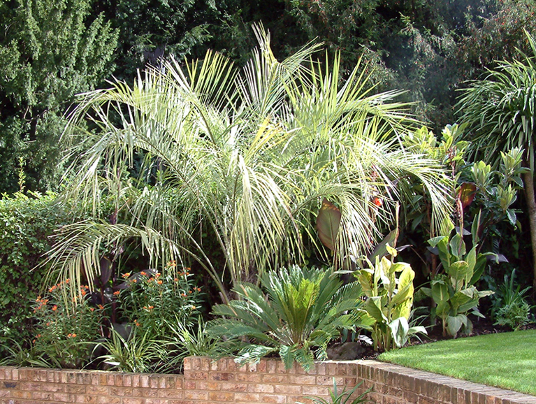 Palm tree and exotic plants in a London garden | Urban Tropics