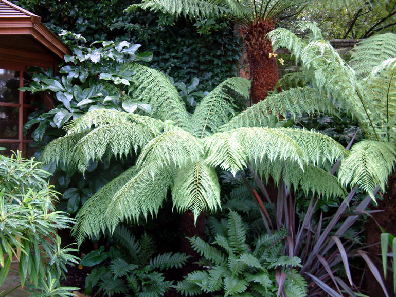Tree ferns in an exotic garden London