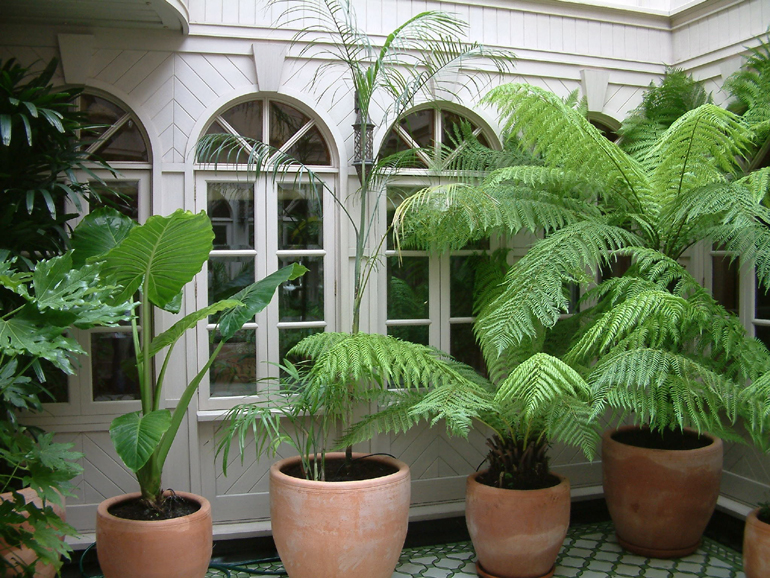 Palm trees in a London exotic garden | Urban Tropics