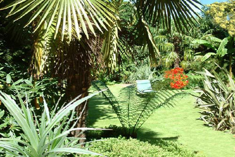 Palm trees and bananas in large tropical garden Hampstead